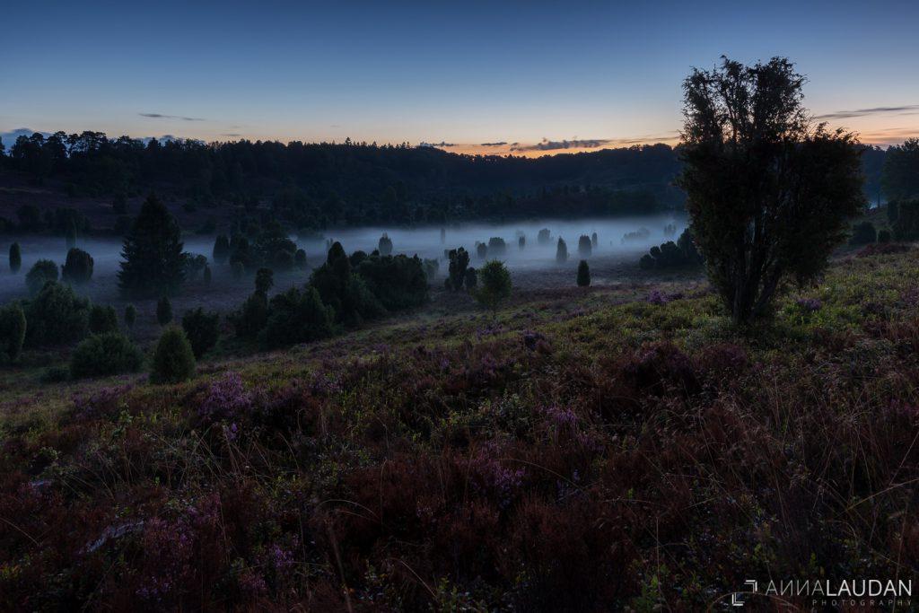Morgennebel am Totengrund, Lüneburger Heide bei Wilsede